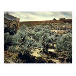 Vintage Garden of Gethsemane Jerusalem Israel Postcard