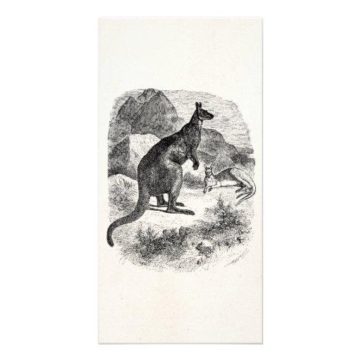 Vintage Giant Kangaroo Personalized Kangaroos Personalized Photo Card
