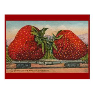 Vintage Giant Strawberries Postcard
