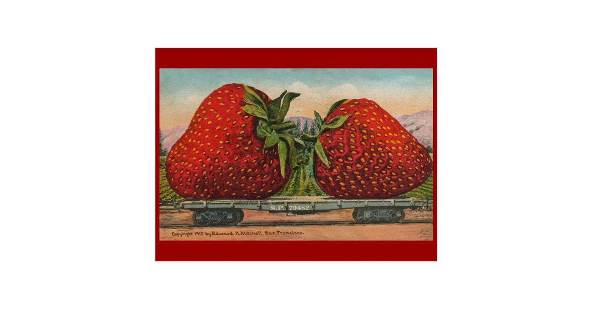 Vintage Giant Strawberries Postcard Zazzle Com