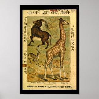 Vintage Giraffe Gazelle Natural History Print