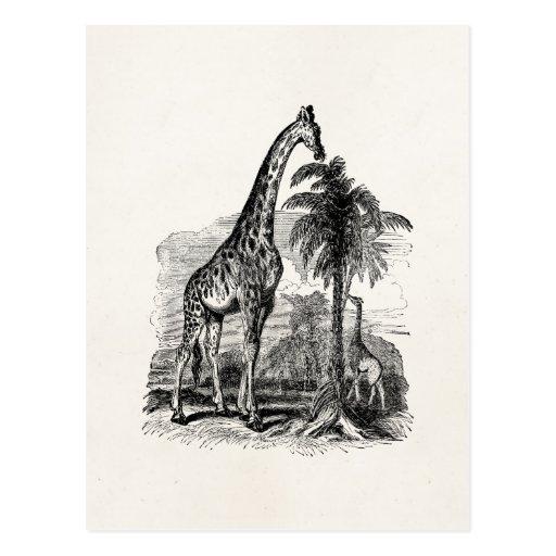 Vintage Giraffe Personalized Animal Illustration Postcards