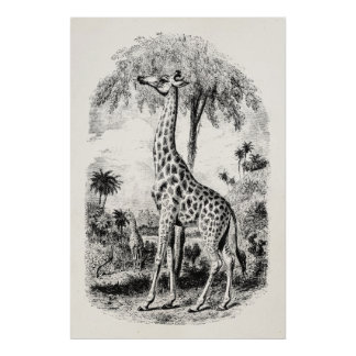 Vintage Giraffe Personalized Animal Illustration Poster