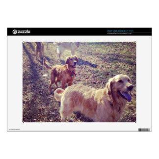 Vintage golden retriever dogs lined up acer chromebook decals