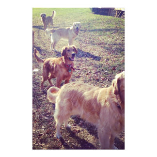 """Vintage golden retriever dogs lined up 5.5"""" x 8.5"""" flyer"""