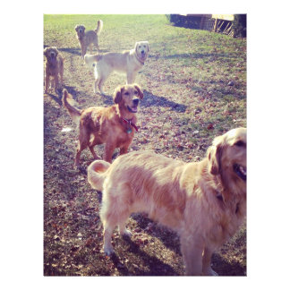 """Vintage golden retriever dogs lined up 8.5"""" x 11"""" flyer"""