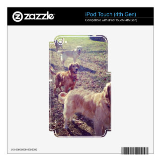 Vintage golden retriever dogs lined up skin for iPod touch 4G