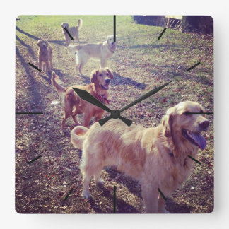 Vintage golden retriever dogs lined up square wall clock