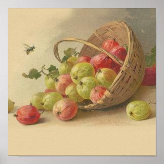 Vintage gooseberries poster