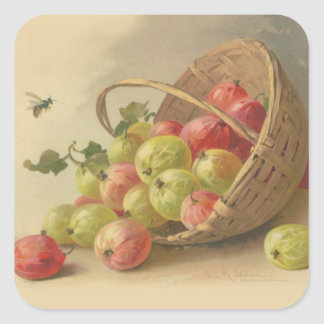 Vintage gooseberries square stickers