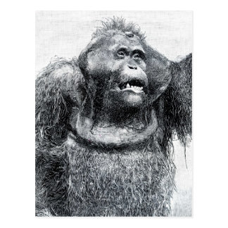 Vintage Gorilla primate drawing sketch design Postcard