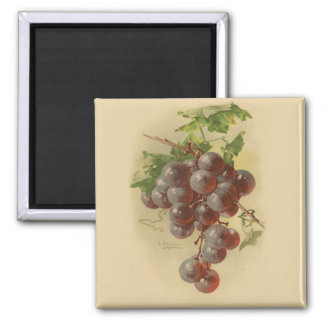 Vintage grapes magnet