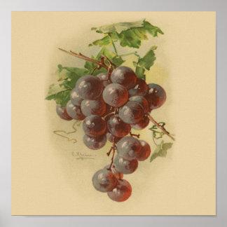 Vintage grapes print