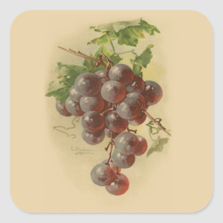 Vintage grapes square sticker