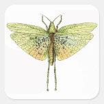 Vintage Grasshopper Print Stickers