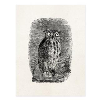 Vintage Great Horned Owl Halloween Owls Postcard