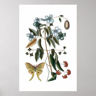 Vintage green botanical poster