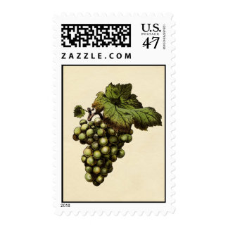 Vintage Green Grapes Postage Stamps