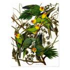 Vintage Green Parakeets Parrots Postcard