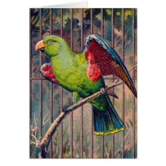 Vintage Green Parrot Print Card