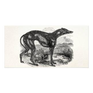 Vintage Greyhound Dog 1800s - Greyhounds Dogs Card
