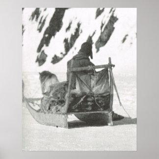 Vintage Groenlandia, equipo ártico del perro y tri Poster