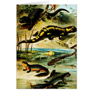 Vintage Group of Salamanders Illustration Card