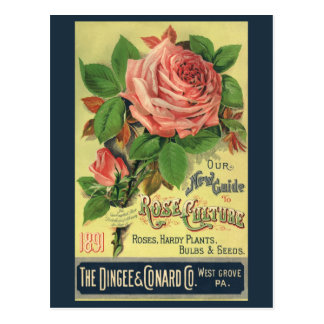 Vintage Guide to Rose Culture Book Cover Art, 1891 Postcard
