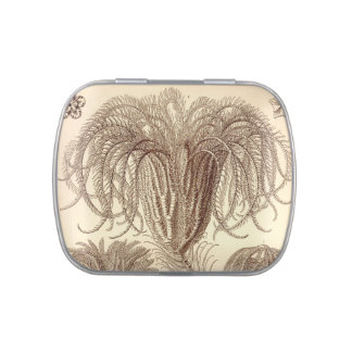 Vintage Haeckel Candy Tins