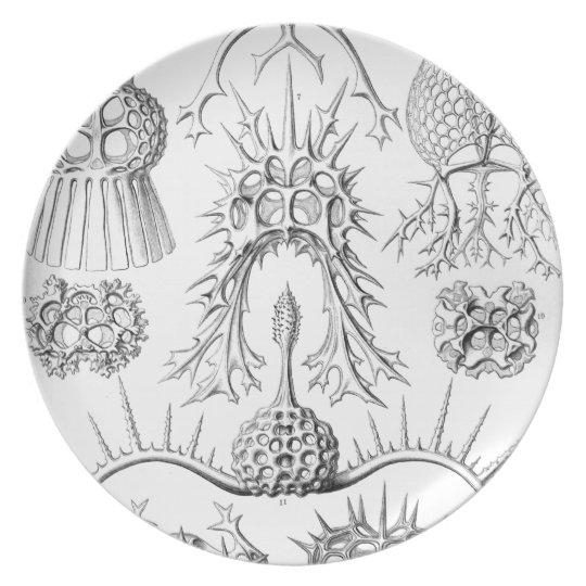 Vintage Haeckel Dinner Plate