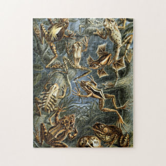 Vintage Haeckel Frogs and Toads Jigsaw Puzzle
