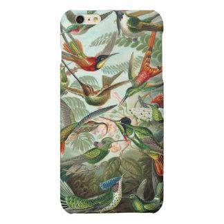 Vintage Haeckel Hummingbirds Matte iPhone 6 Plus Case