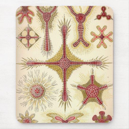 Vintage Haeckel Mouse Pad