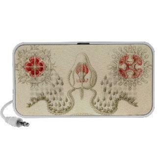 Vintage Haeckel Notebook Speakers