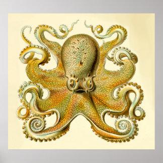 Vintage Haeckel Oversized Octopus Print