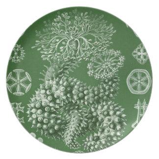 Vintage Haeckel Plato Para Fiesta