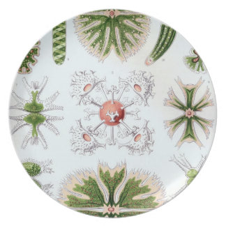 Vintage Haeckel Plato
