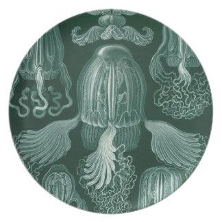 Vintage Haeckel Platos De Comidas