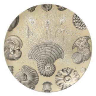 Vintage Haeckel Platos Para Fiestas