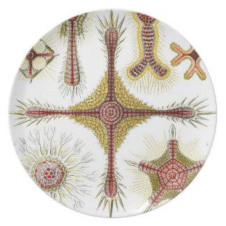 Vintage Haeckel Plato De Comida