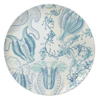 Vintage Haeckel Platos