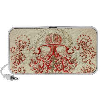 Vintage Haeckel Speaker