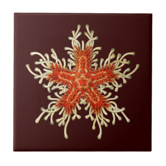 Vintage Haeckel Starfish Ceramic Tile