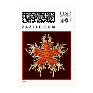 Vintage Haeckel Starfish Postage