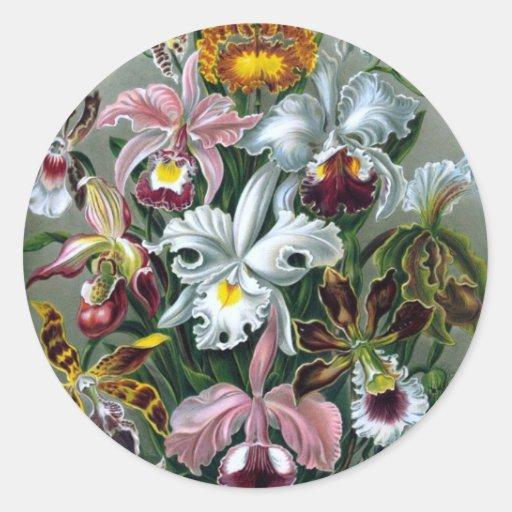 Vintage Haekel Botanical Sticker
