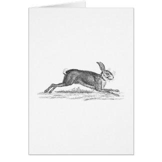 Vintage Hare Bunny Rabbit 1800s Illustration Card