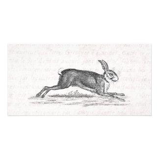Vintage Hare Bunny Rabbit 1800s Illustration Photo Card Template