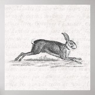 Vintage Hare Bunny Rabbit 1800s Illustration Poster