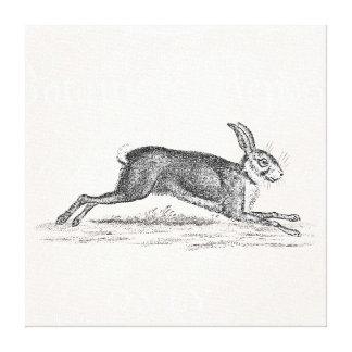 Vintage Hare Bunny Rabbit Illustration -Rabbits Canvas Print