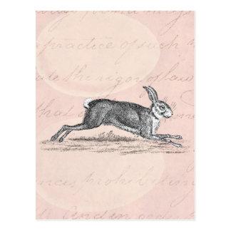 Vintage Hare Bunny Rabbit Illustration -Rabbits Postcard